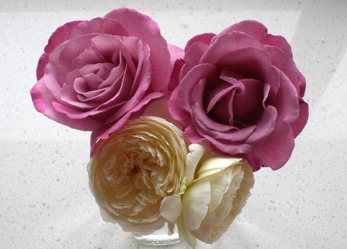 roses 21Dec13