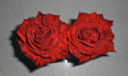 roses 09May14