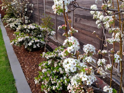 garden 28Sep14