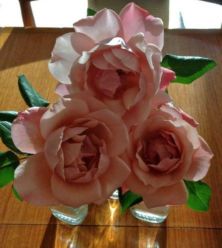 roses 03Jan15
